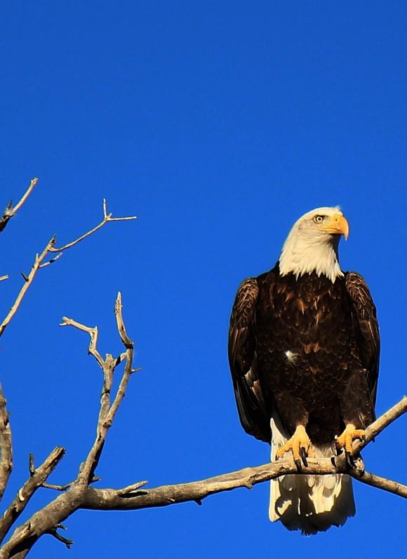 Janille Baker 02-Feb-eagle